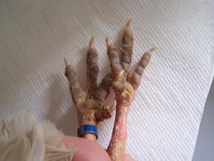 patas afectadas por sarna